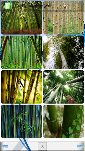HD HQ Bamboo Wallpapers