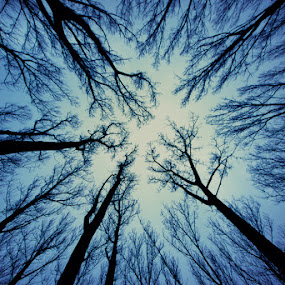 Veins of earth by Steve Struttmann - Nature Up Close Trees & Bushes ( sky, blue, trees, spictures, luxembourg )