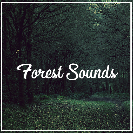 Relax Forest Sounds: Ambient Nature Sounds - Apps on Google Play