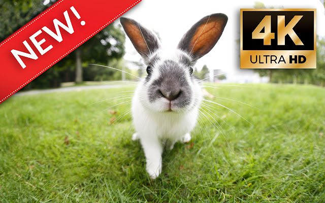 Bunny & Rabbit HD/4K Bunny & Rabbit Themes