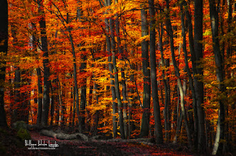 Photo: Happy weekend to all!  website: www.naturephotographie.com  #fallphotos  #autumnphotography  #forestphoto
