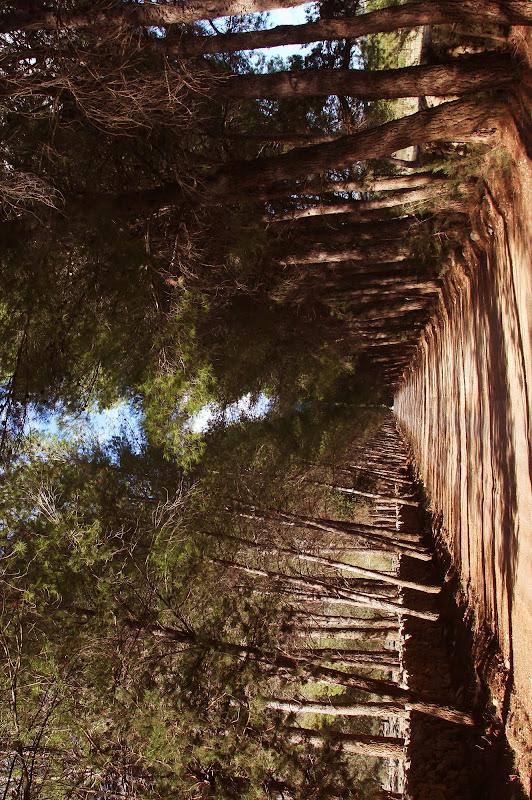 Il lungo viale tra gli alberi di Solemare