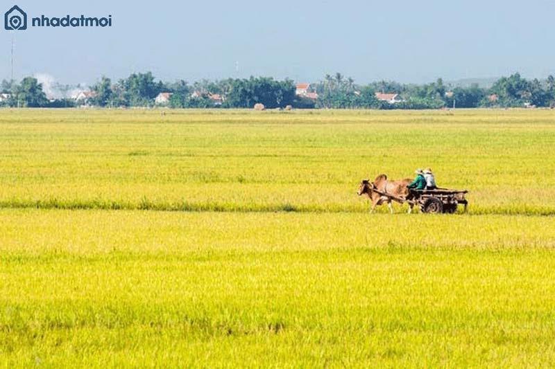Thủ tục chuyển đổi đất nông nghiệp sang thổ cư mới nhất 2020