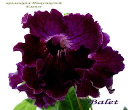 Photo: Balet