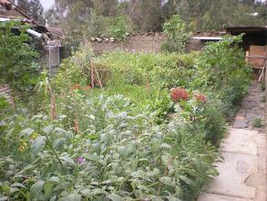 Photo: Garden 2.