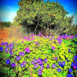 Blütenmeer auf einer Mauer by Marianne Fischer - Instagram & Mobile iPhone