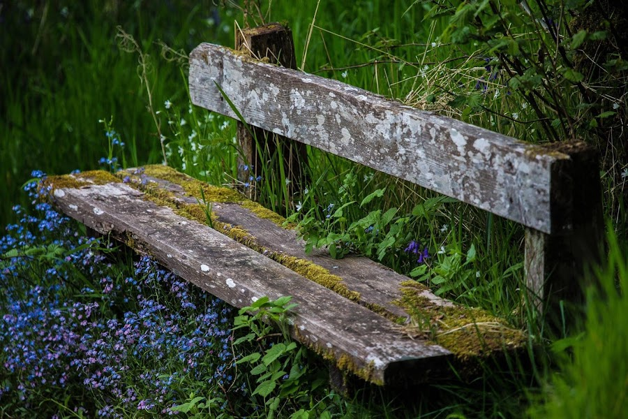 Forget-me-not Bench.Falls of Shin. by David Ramsay - Artistic Objects Furniture