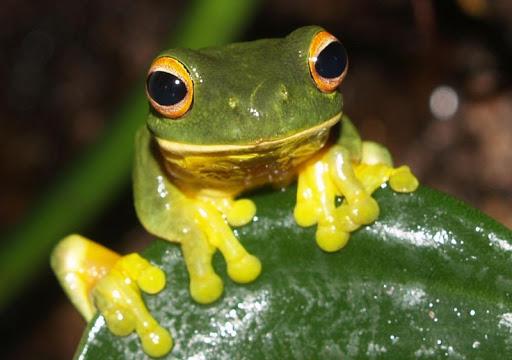 Rainforest Wildlife Wallpapers