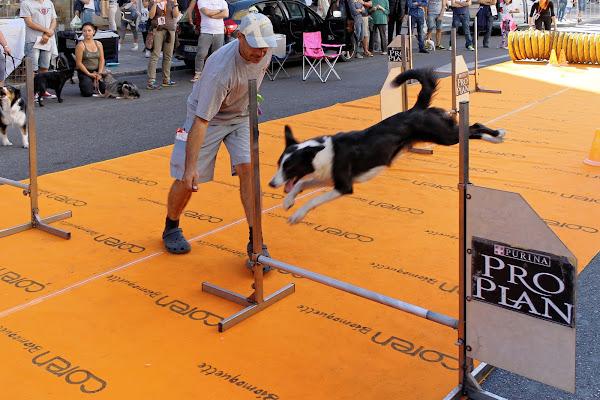 Agility dog di GVatterioni