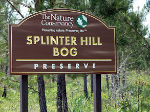 Photo: Splinter Hill Bog Preserve in Alabama.