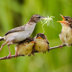 Big one kids.... by Bernard Tjandra - Animals Birds