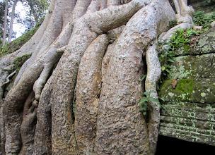 Photo: Tässä kohtaa viidakko on ehkä voitolla temppelistä