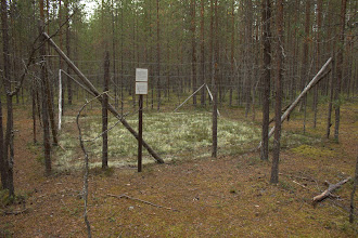 Photo: Lichen enclosure - actually keeps the reindeer out