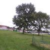 Sawmp white oak