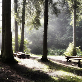 Remembering by Codrutza Iana - Instagram & Mobile Android ( forest, sunrise, bench, resting, relaxation,  )