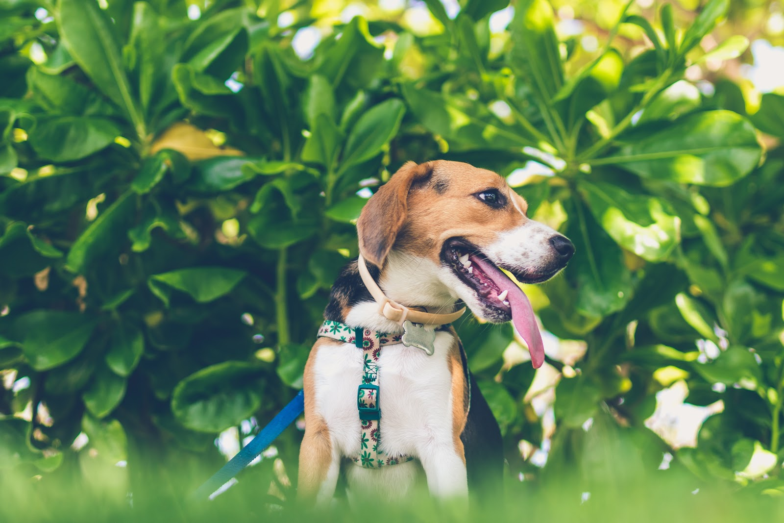 CBD oils for dogs information and benefits