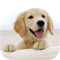 Wallify - Pets Wallpapers (Buzzsharer) icon