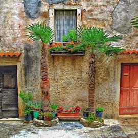 Dressed doorways by Mandy Hedley - City,  Street & Park  Neighborhoods ( palm, doors, street, croatia, trees, rovinj,  )