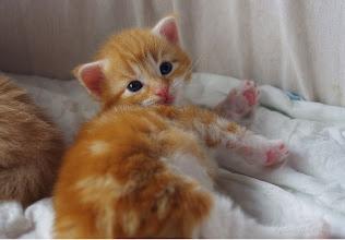 Photo: Danaus - 3 weeks old