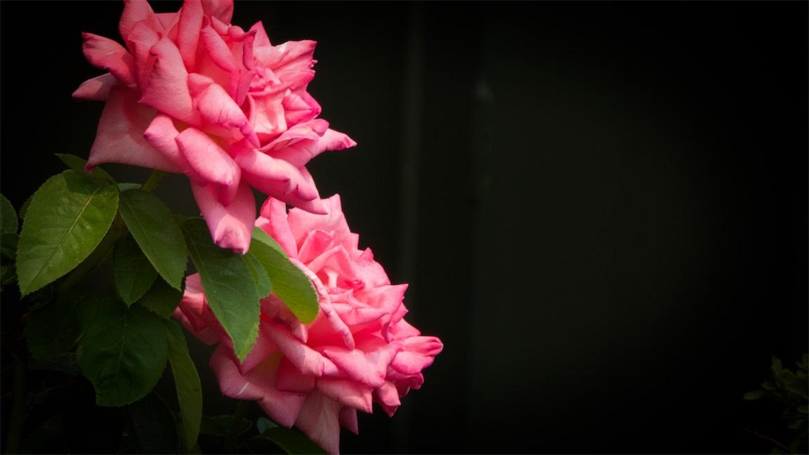 Pink Cascade.jpg