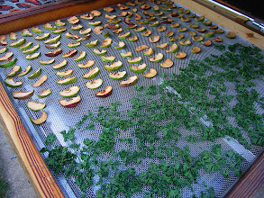 """Photo: Apples and parsley were beautifully dried in 34 hours of """"partly sunny"""" weather"""