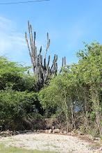 Photo: Vegetación de la zona