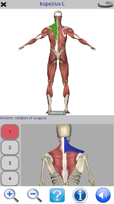 Visual Anatomy Freeのおすすめ画像4