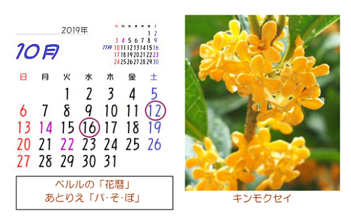 10月の花暦