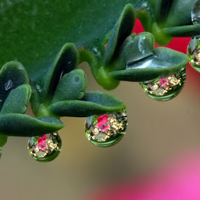 Dews by Jasen Tan - Nature Up Close Flowers - 2011-2013