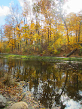 Photo: Beautiful golden leaves in the sunlight above Dogwood Pond at Hills and Dales Metropark in Dayton, Ohio.