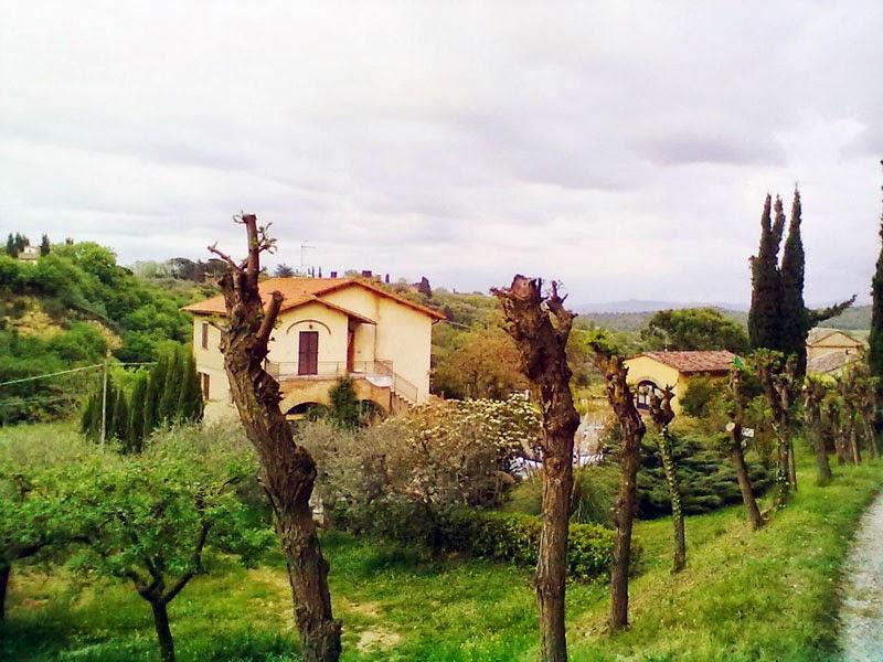 Наш Агритуризмо, ферма с виноградником, оливковыми рощами, сельским бытом и плавательным бассейном