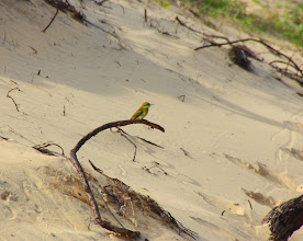 Photo: Year 2 Day 21  -  Woodpecker in the Sand Dunes