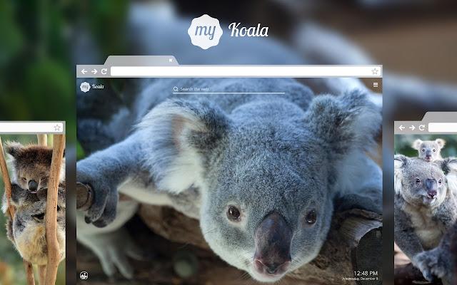 My Koala Bear Adorable Koala Hd Wallpapers