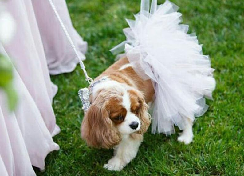 Dog Wedding Accessories dog bridesmaid tutu