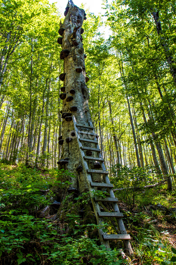 Stairways to heaven by Stanislav Horacek - Landscapes Forests
