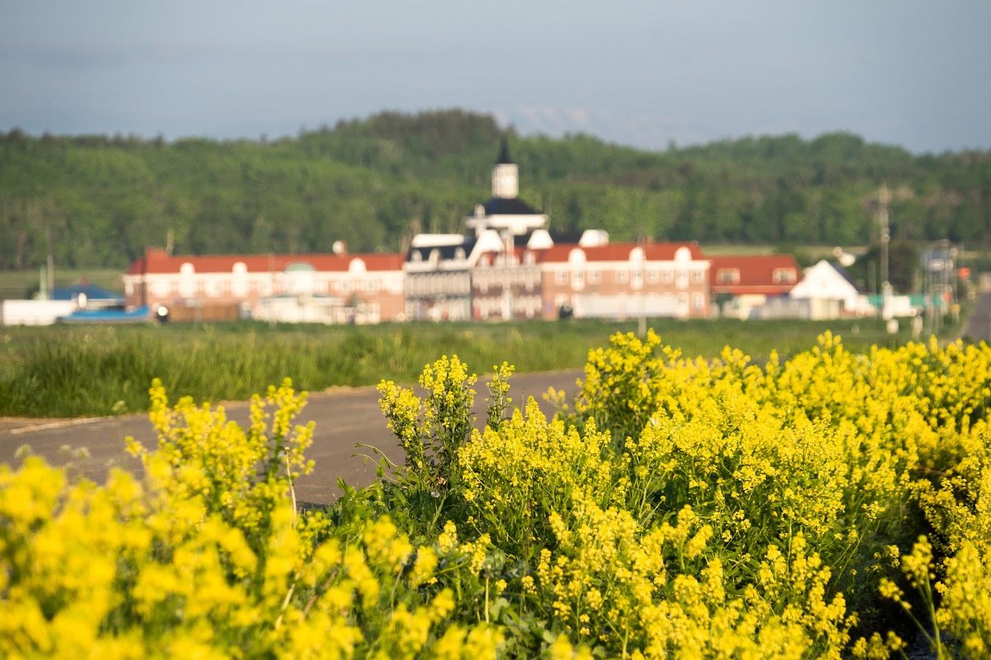 道端に咲く幸せの黄色い花