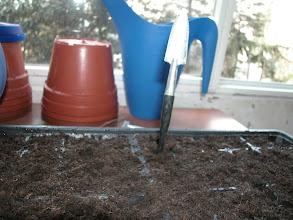 Photo: Çim kaplarında her yuvaya bir delik açıyoruz...