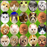 Cat Connect Onet apk mod