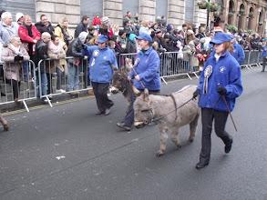 Photo: More donkeys.