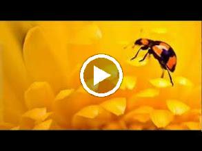 Video: A. Vivaldi  Concerto 'Sua Altezza Reale di Sassonia' in G minor (RV 576) - Part I -