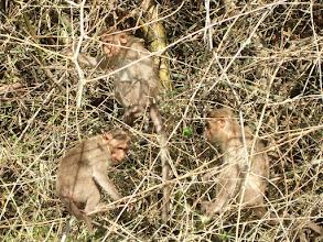 Photo: Well camouflaged monkeys