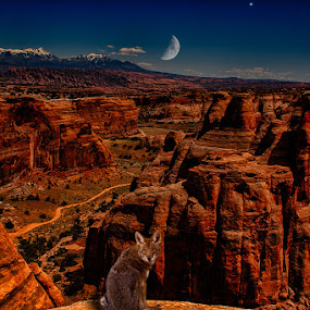 Coyote Moon Canyon by Eugene Linzy - Digital Art Places ( coyote, quarter moon, mountains, moon, snow cap, rock formations, utah, trail, canyon, dusk )