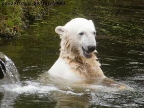 Photo: Gutgelaunter Knut :-)