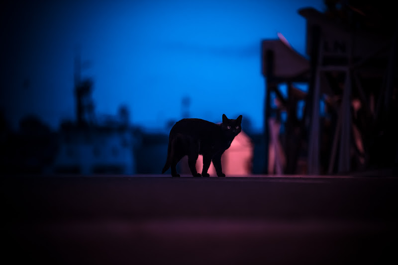 il gatto nero che ti guarda di Alessi Girlando