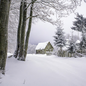 by Marius Turc - Nature Up Close Trees & Bushes ( fence, winter, snow, trees )