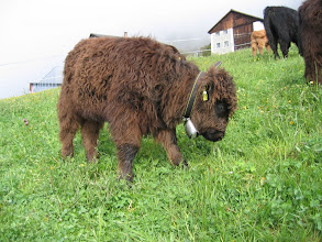 Photo: Maisie mit CowCam