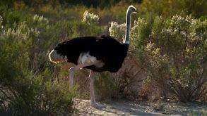 Super Sloths and Ostrich Marathons thumbnail