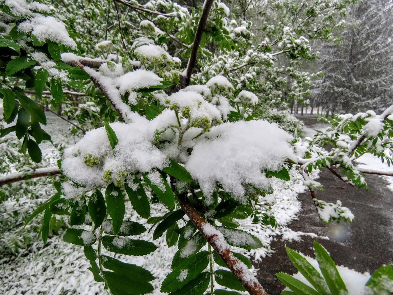 с майским снегом картинки гиф промывая увидел, что