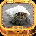 Healthy Hermit Crab icon