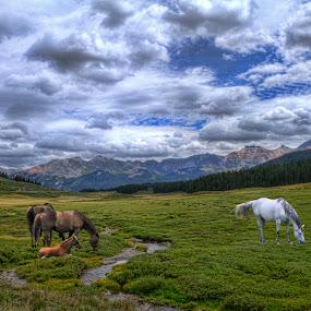 by Len Lambert - Uncategorized All Uncategorized ( clouds, field, mountains, stream, horses,  )